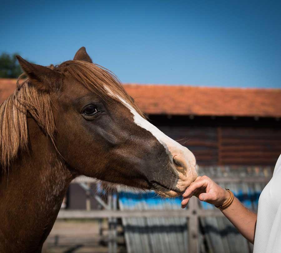 Werkwijze PaCo Paard en Coach Tilburg | Brabant