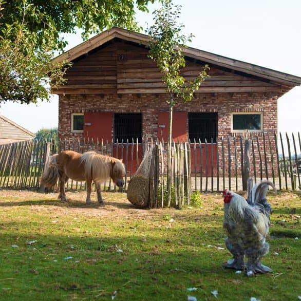 Coaching met paarden – paardencoaching - Tilburg - Brabant